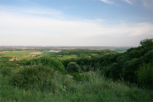 キノネロが畑に向かう途中に見えるお気に入りの景色