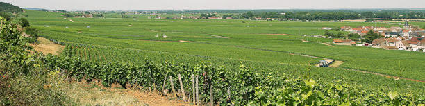 ブルゴーニュと言えば、ロマネコンティ。左端の上は、ダモードの畑