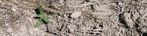 土壌の様子