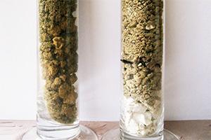 小石混じりの白亜質の石灰質土壌は水はけがよく、ふくよかでミネラルを感じられるシャルドネに適した土壌であることが多いです